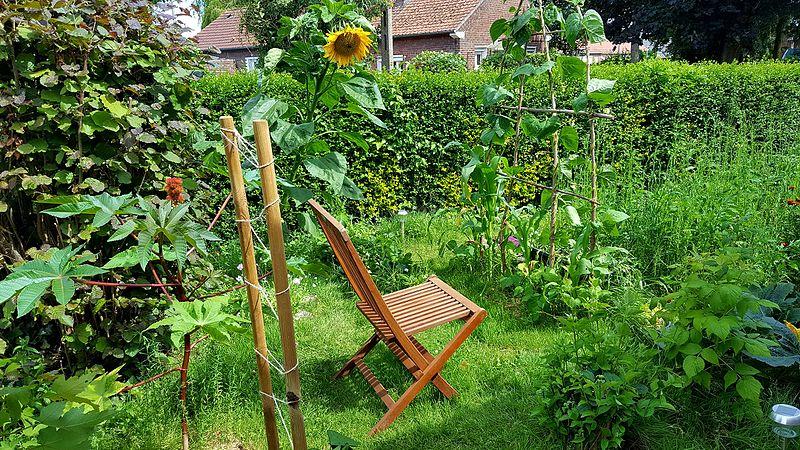 Jardin_en_permaculture