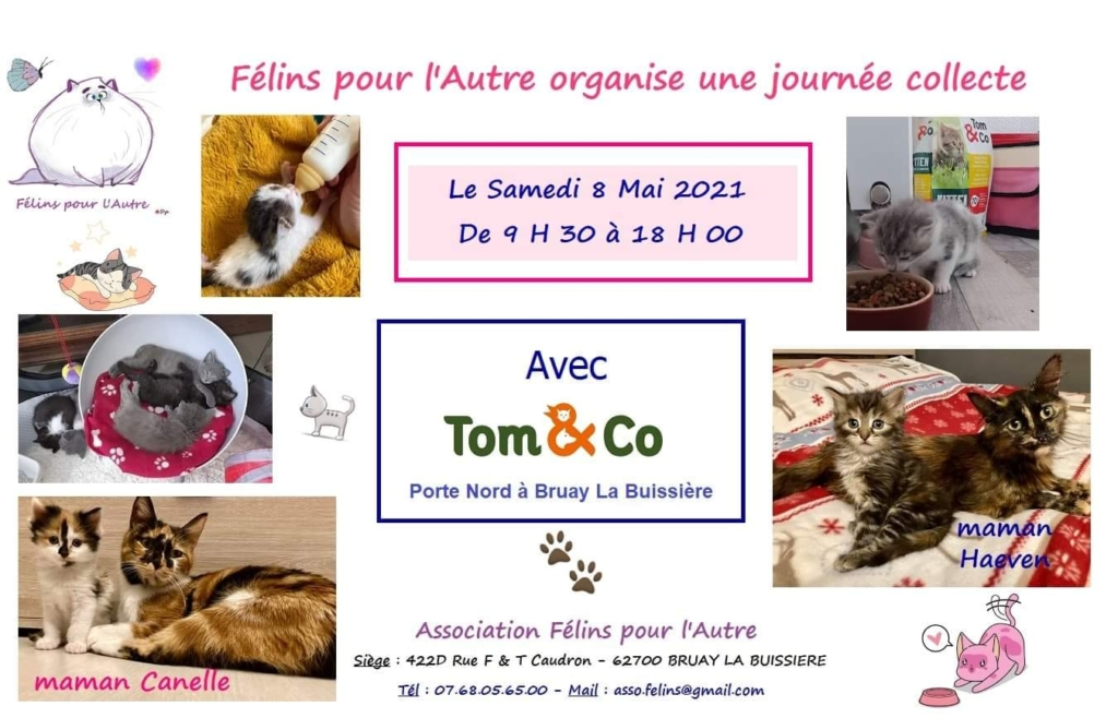 collecte chats