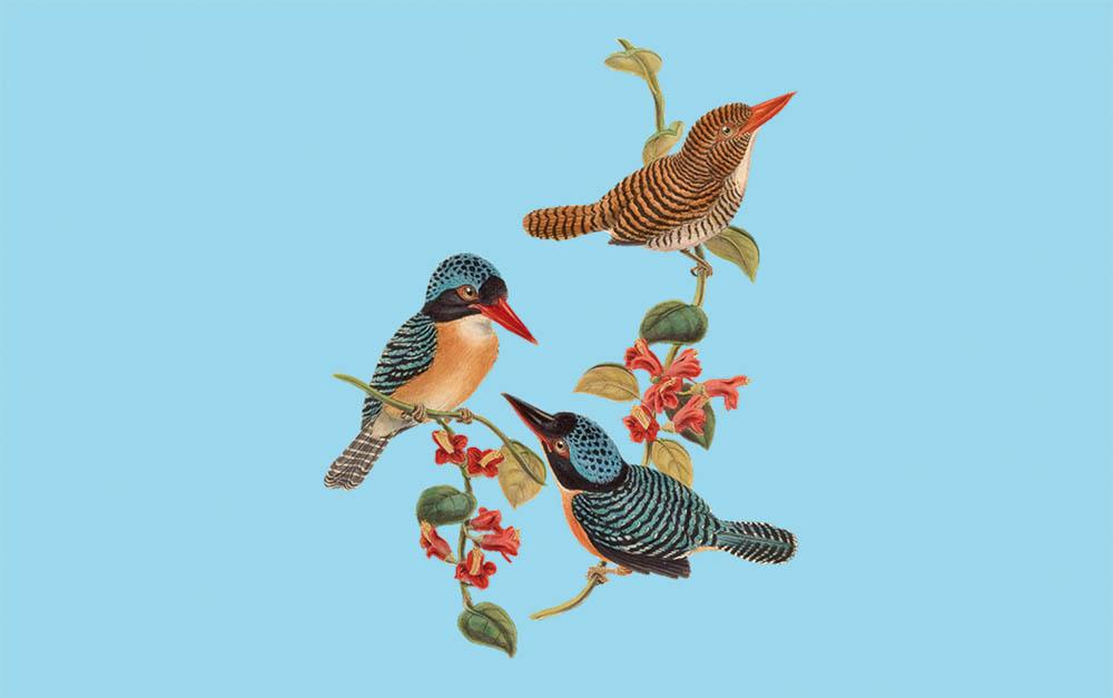 langage oiseaux